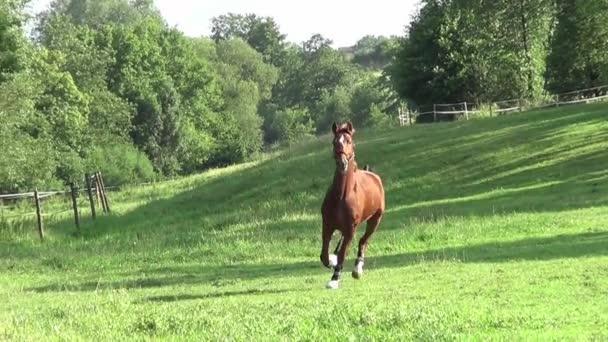 Horse run free slow motion