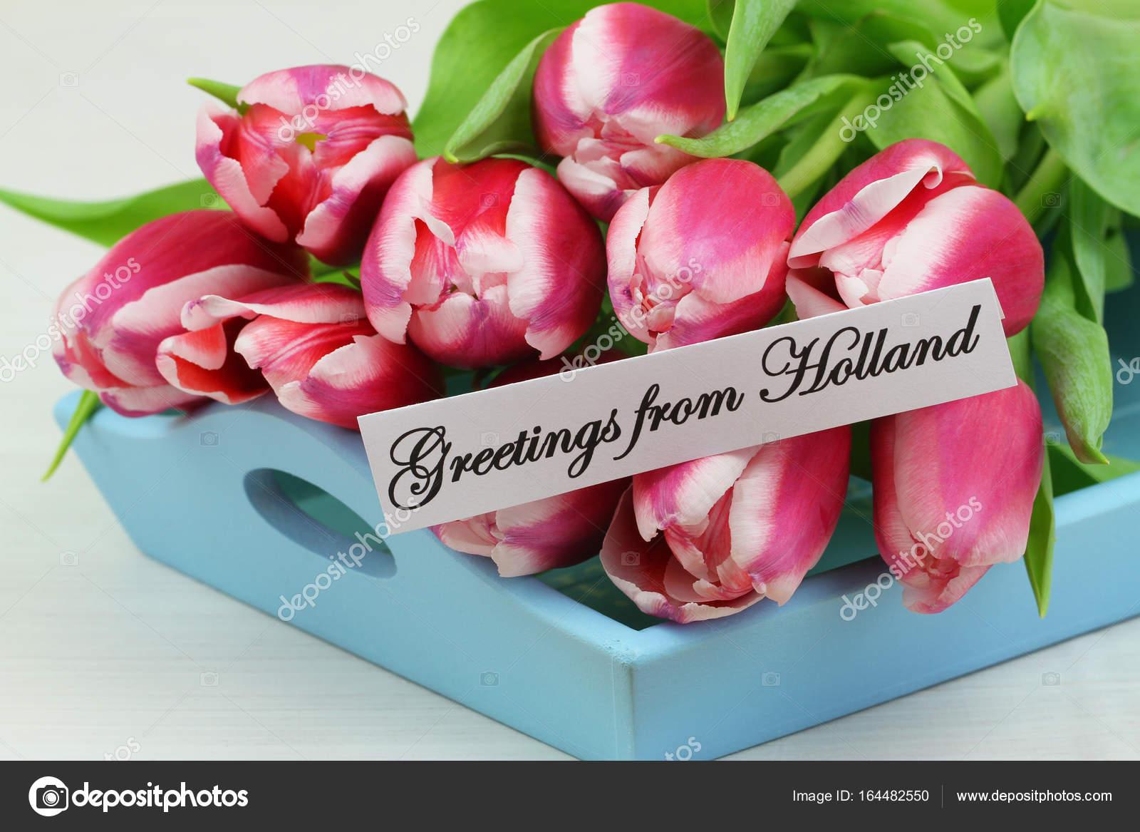 Groeten Uit Holland.Groeten Uit Holland Kaart Met Roze Tulpen Op Blauwe Houten Dienblad