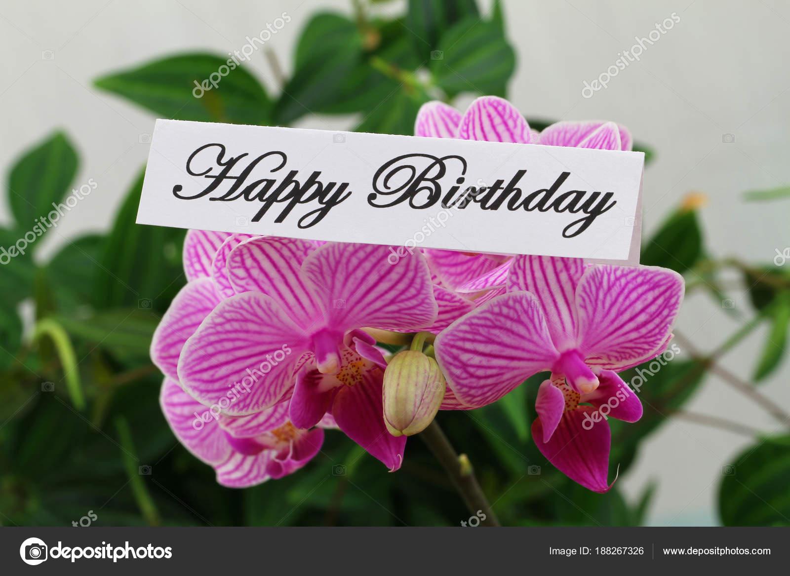 Happy birthday card pink orchid stock photo graletta 188267326 happy birthday card pink orchid stock photo izmirmasajfo
