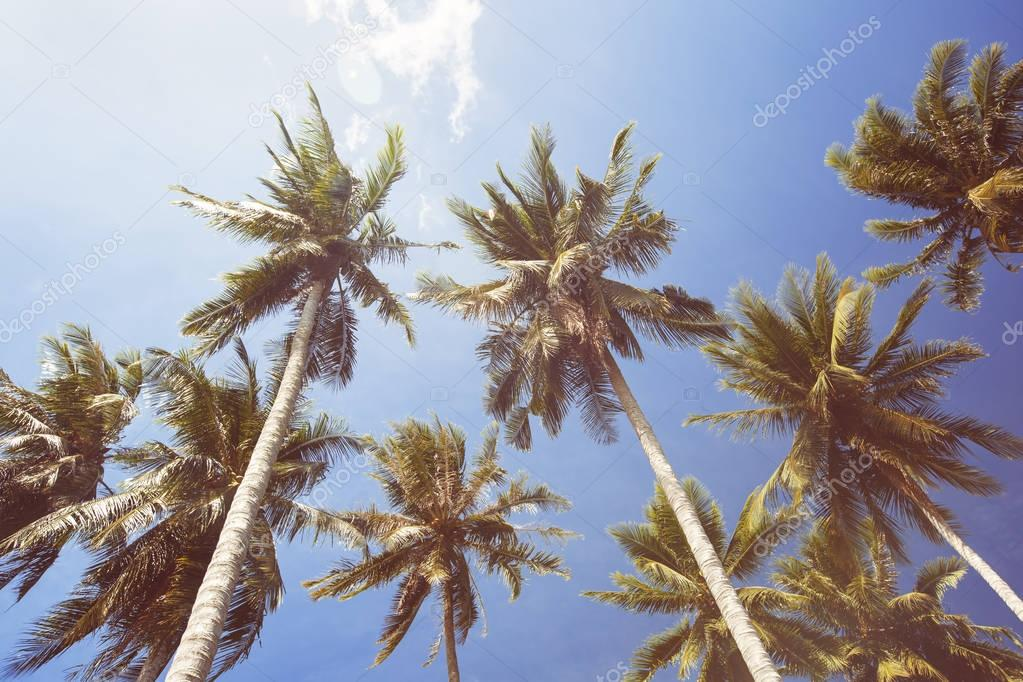 Coconut Palm trees on blue sky