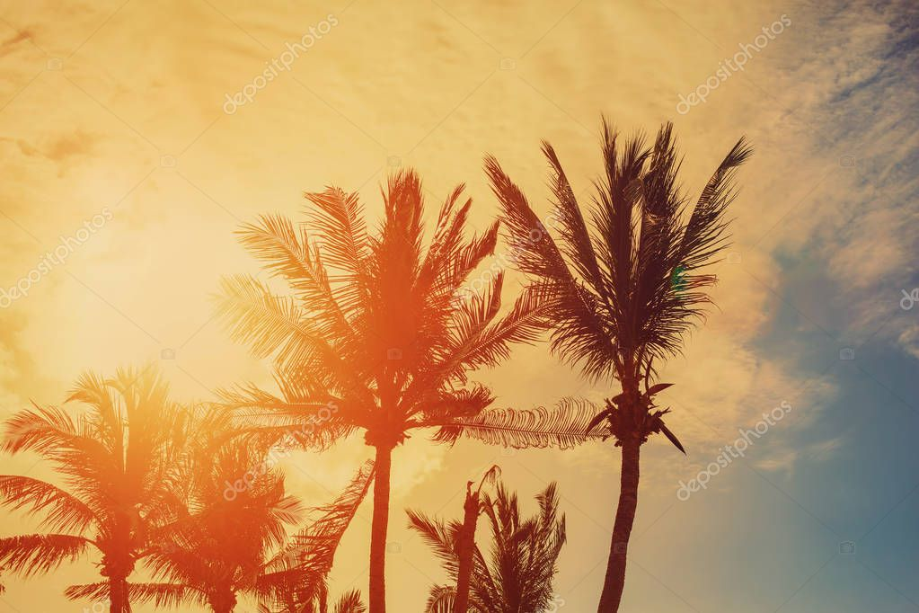 Palm trees on evening sky