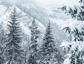 frostige Winterlandschaft im verschneiten Wald. Weihnachten Hintergrund mit Tannen und verschwommenen Hintergrund des Winters. Frohes neues Jahr