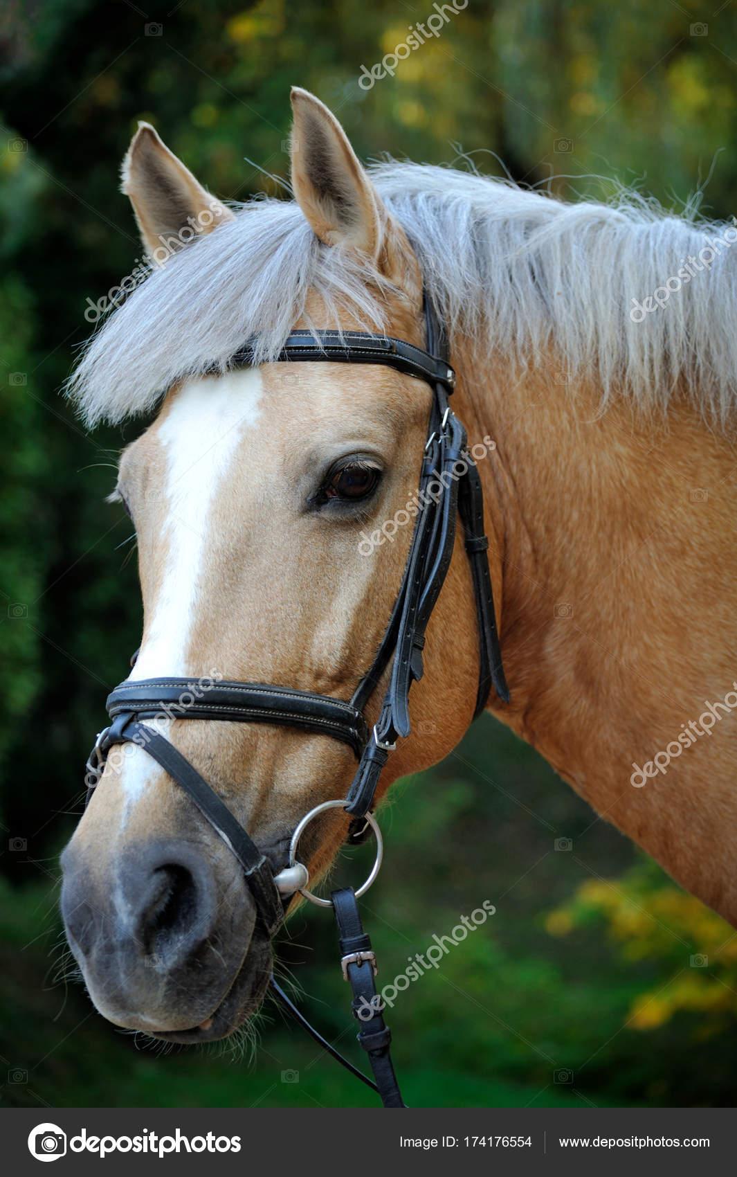 Cheval Tete cheval. tête de près — photographie bpm82 © #174176554
