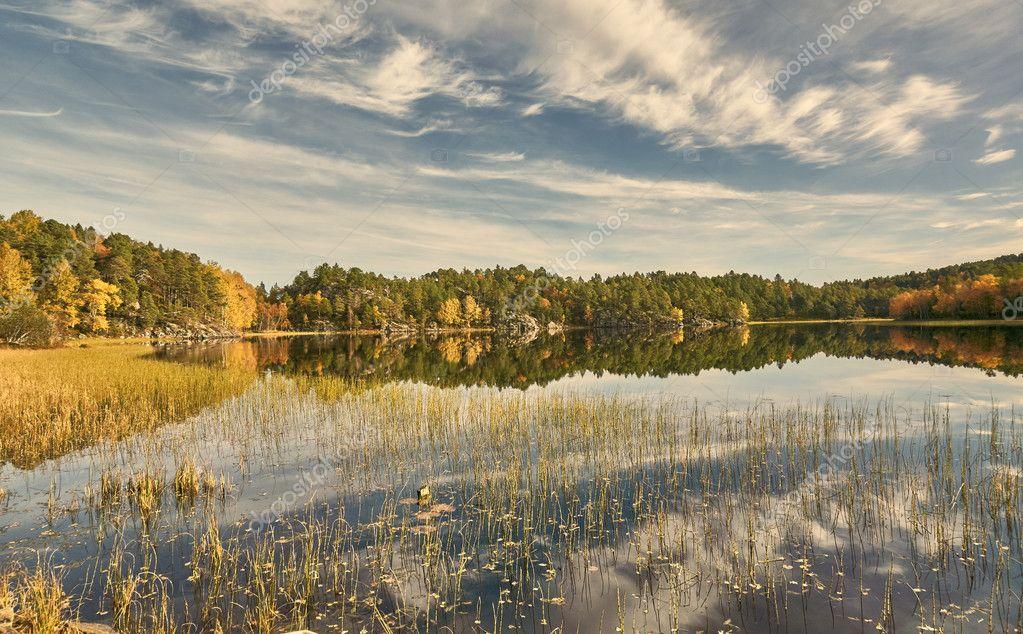 Riet en struiken in het najaar de noorse lake u2014 stockfoto