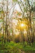 Zelený tropický prales v jasném slunečním světle