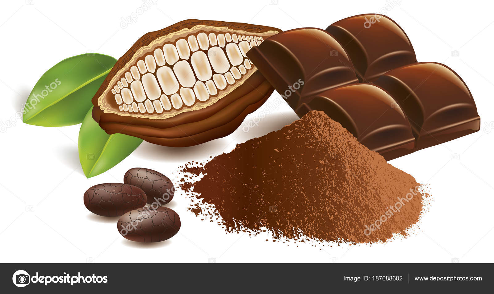 cacao beans chocolate table powder stock vector volod2943 187688602
