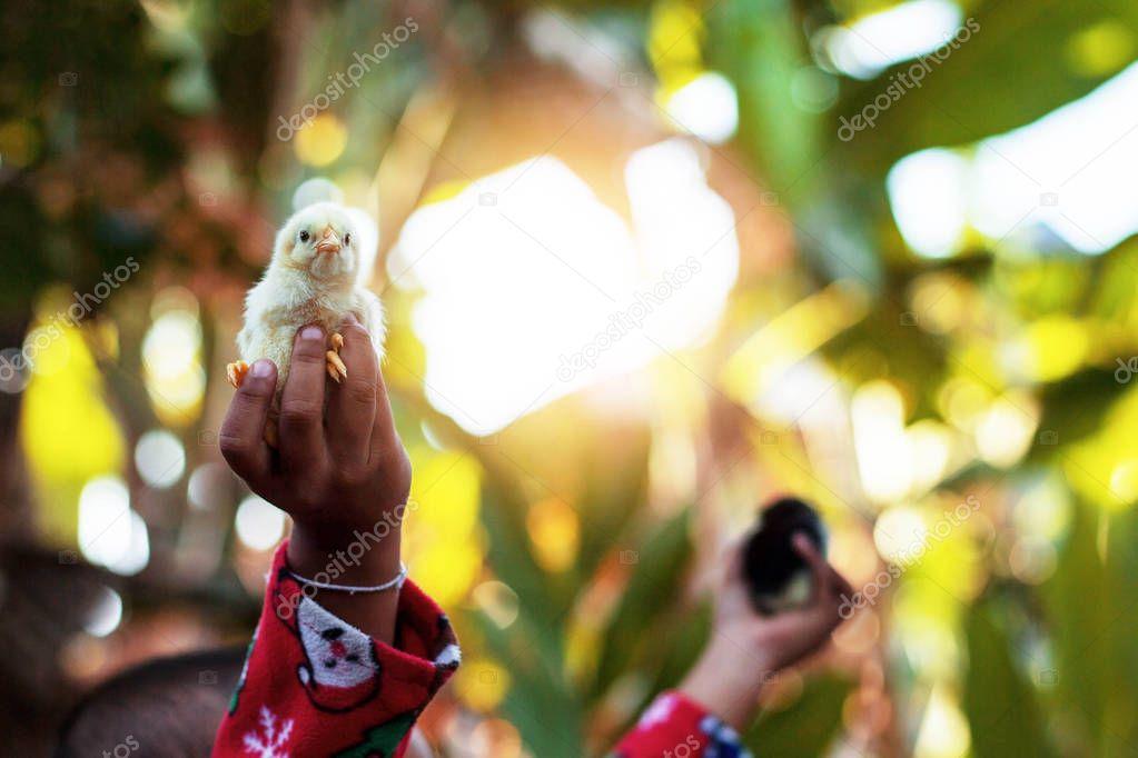 Children holding chicks with sunlight.