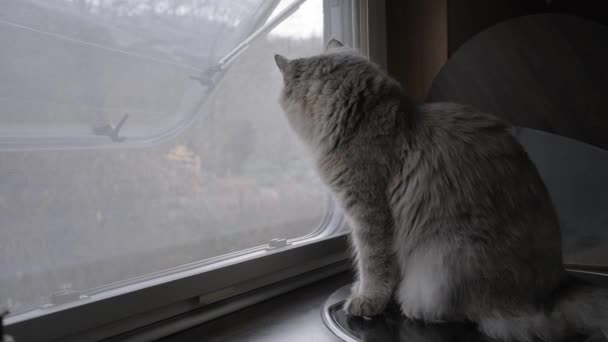 The home-made furry cat on the windowsill looks out the window. The motorhome. Camper. Rv. Van. A wild animal.