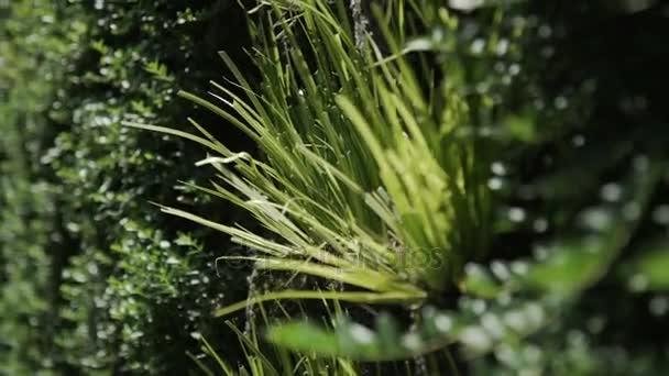 Tall grass vertical growing seamless pattern
