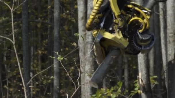Zpomalený pohyb traktoru je sklízení borovic a jejich řezání. Odlesňování, koncepce kácení lesů.