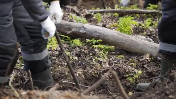 Vysazování lesů ručně. Pracovní proces výsadby stromu. Vysazování lesů ručně. Znovuzalesňování na planetě. Lesnický dělník sázel strom. Příroda. Životní prostředí, koncepce ekologie