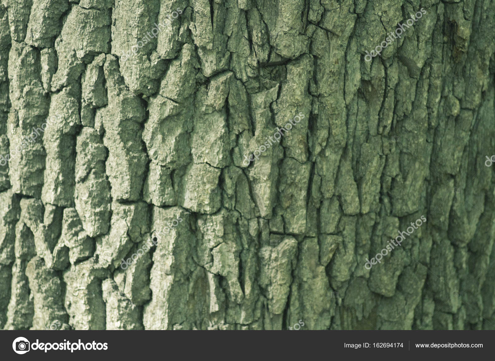 Beautiful Bark of Oak Tinted in Green Color — Stock Photo ...
