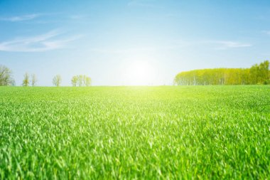 field on sunny day
