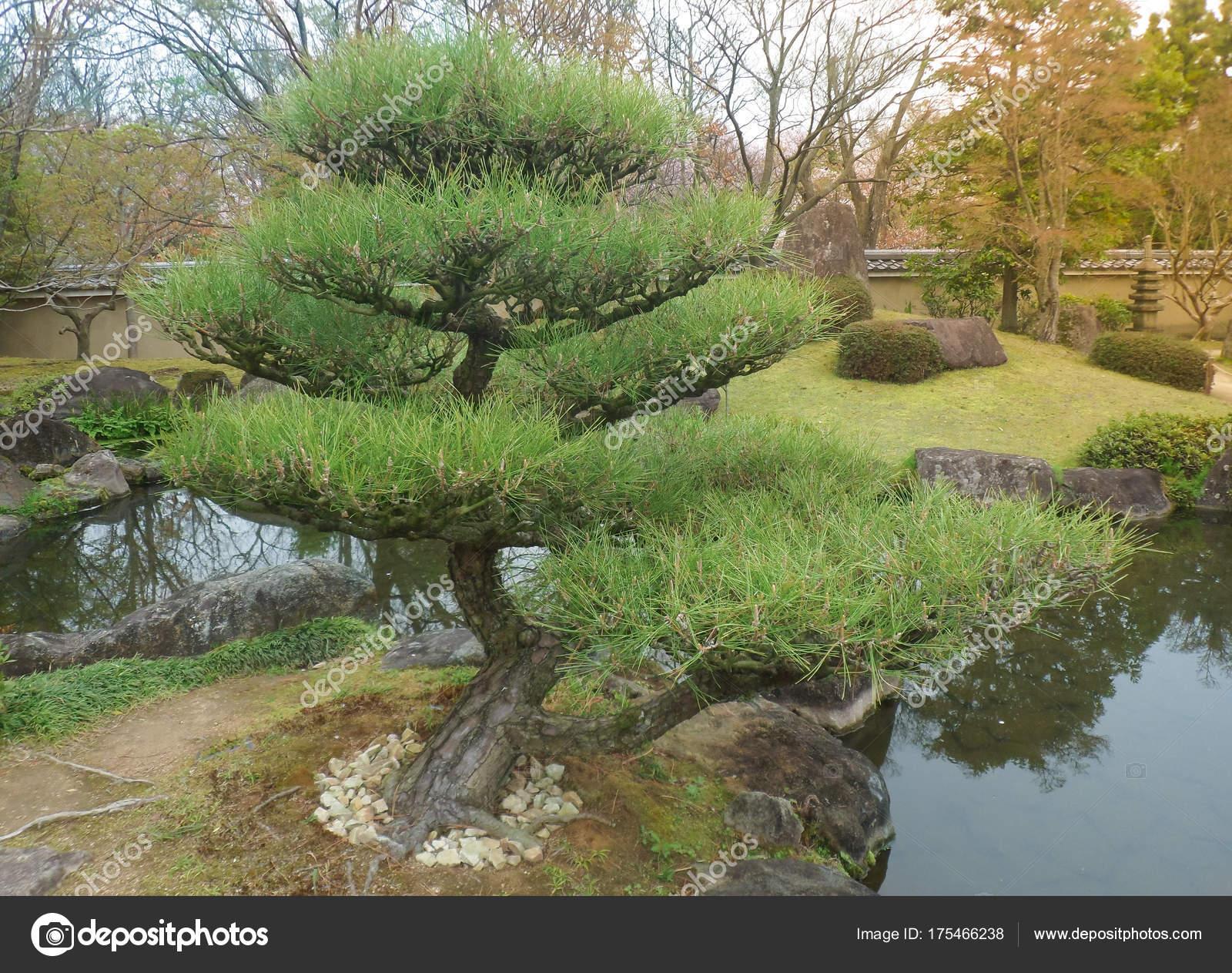 Schönen Bonsai Bäume Einen Garten Japanischen Stil Kyoto Japan