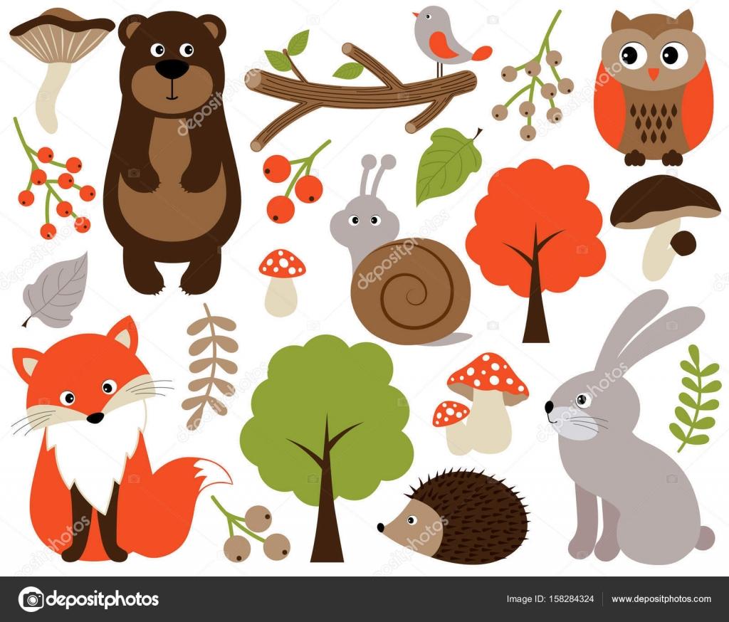 Coloratutto website disegni colorati di animali del bosco