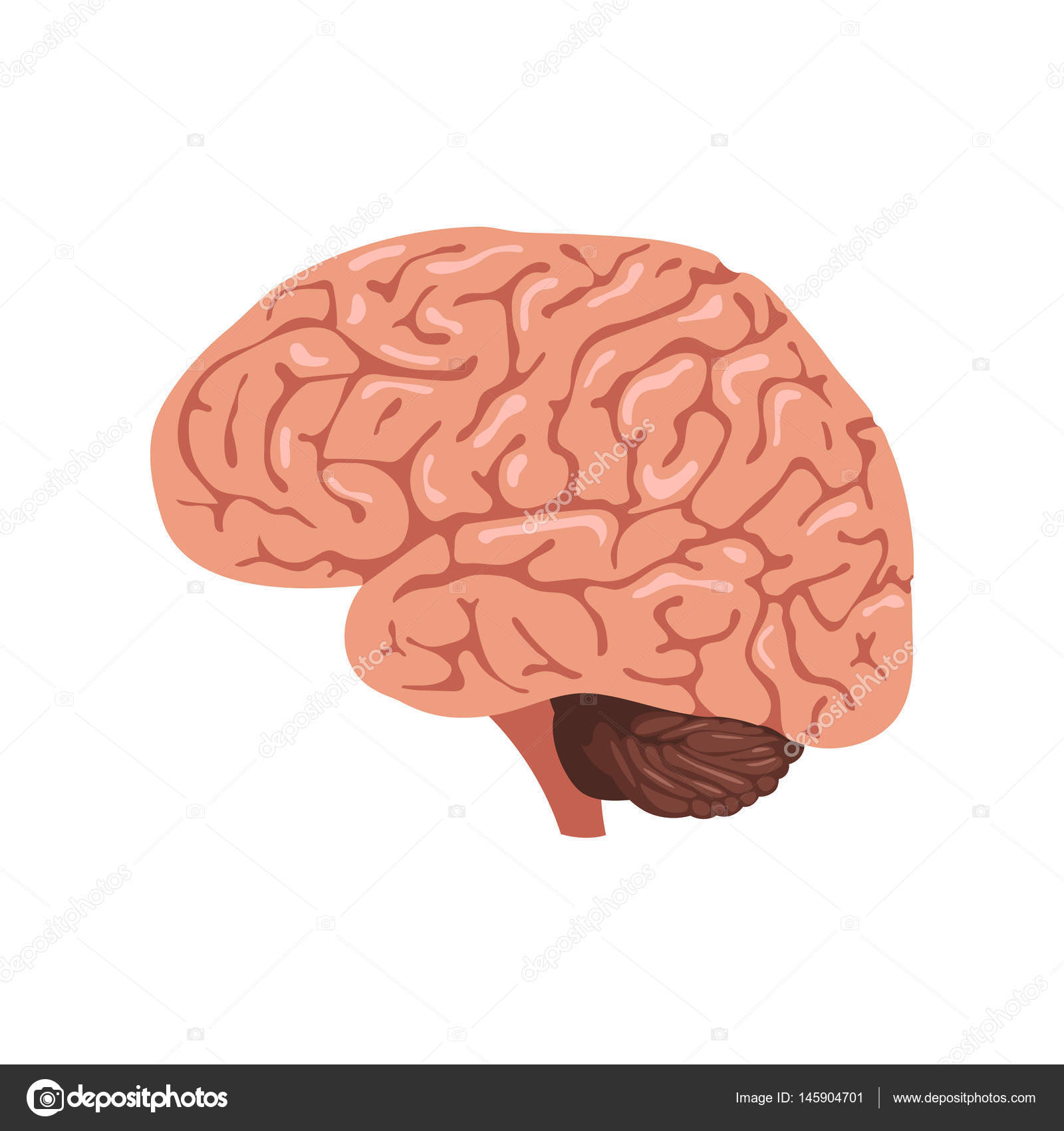 Anatomie des Gehirns Symbol — Stockvektor © EgudinKa #145904701