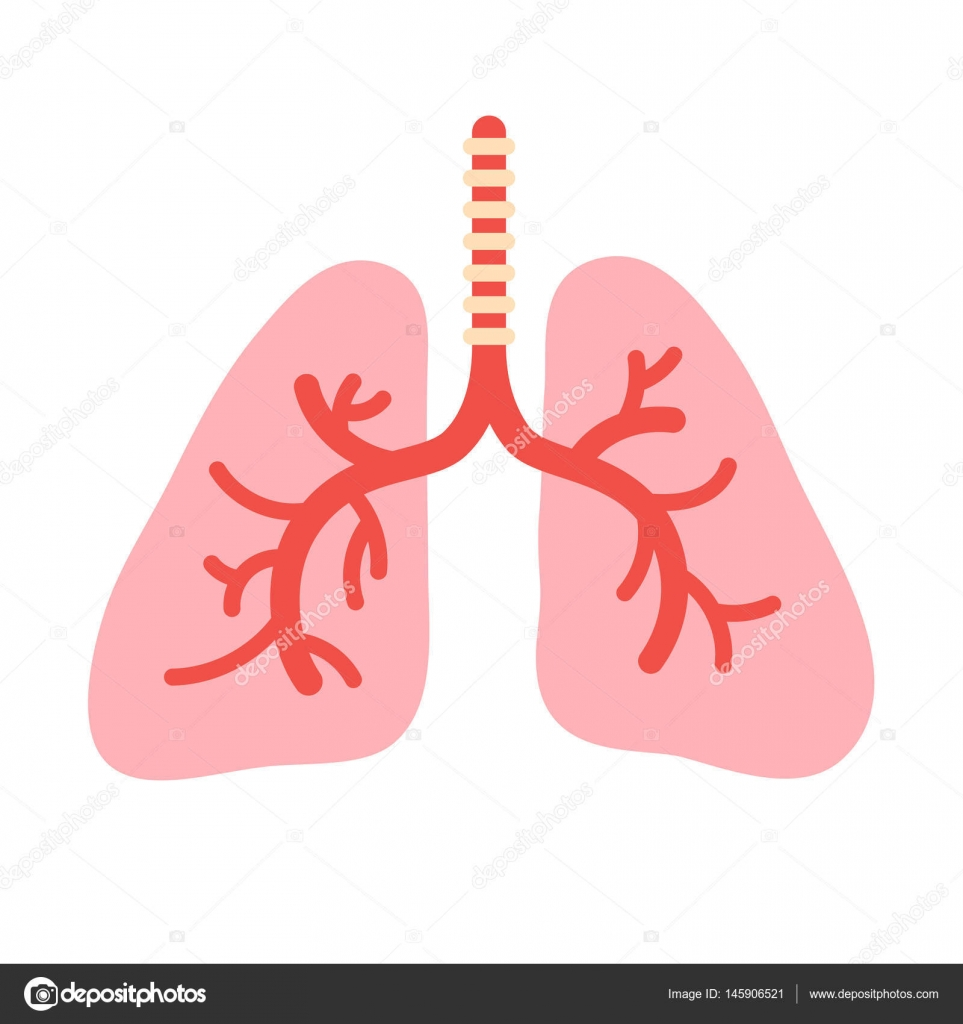 Human lungs anatomy stock vector egudinka 145906521 human lungs anatomy organs bronchial system symbol vector illustration in cartoon style isolated on white background vector by egudinka ccuart Image collections