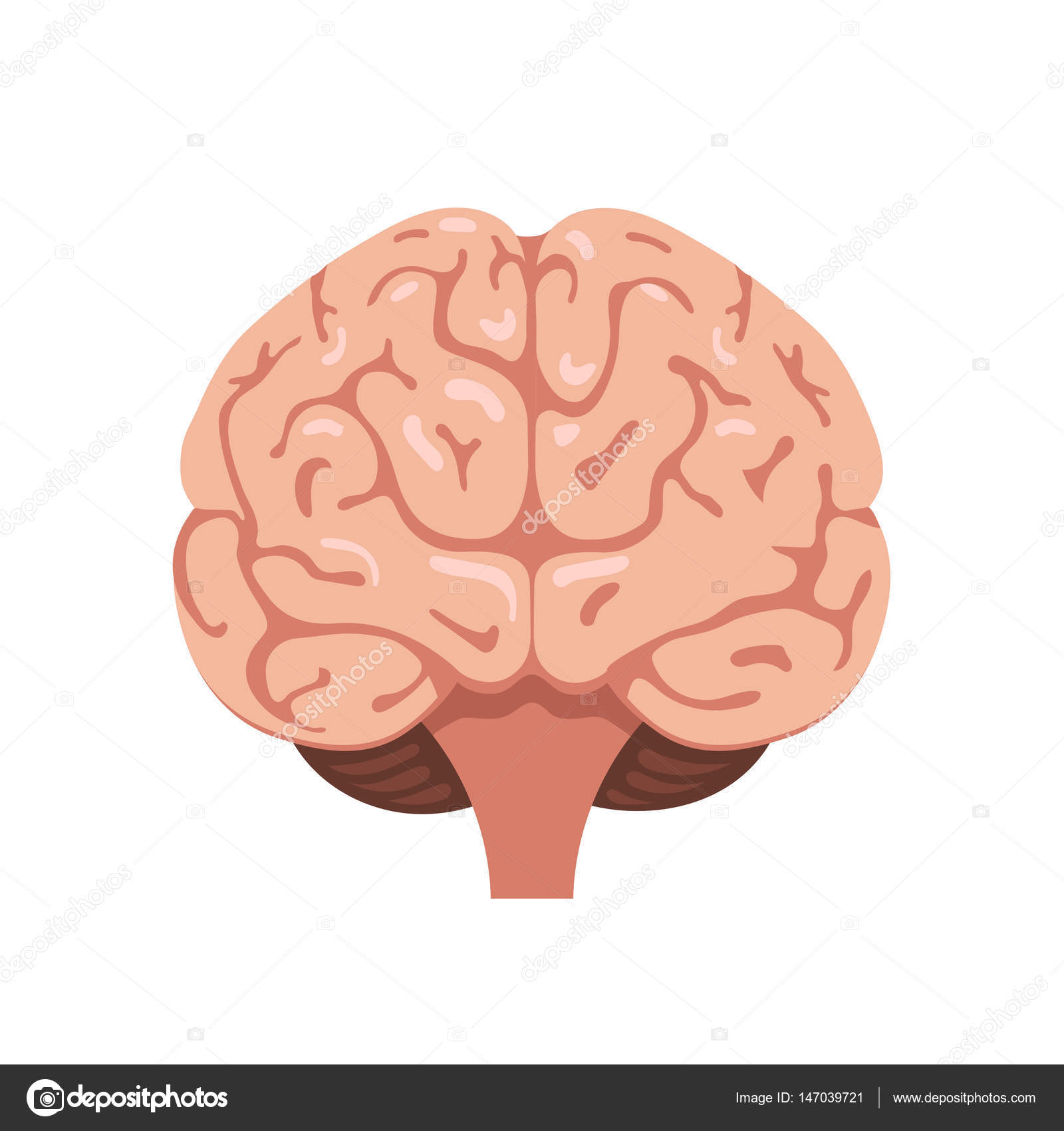 frount brain diagram human body