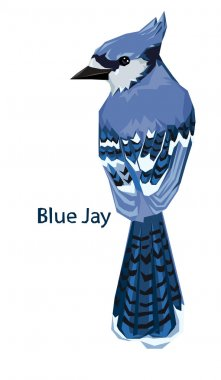 Blue Jay bird isolated