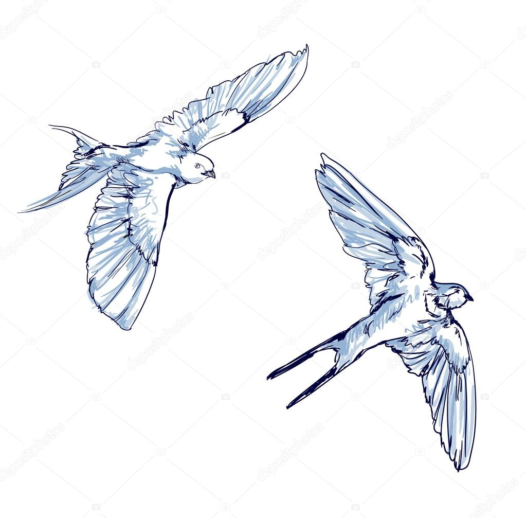 Set of sketches of flying swallows stock vector illustration - Swallow Vector Vector Illustration Isolated Birds Birds Flying Animals Bird Silhouette Bird Vector Swallows Sketch Set Vector By Alsoush