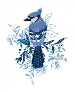 Hand Drawn Blue Jay bird Illustration