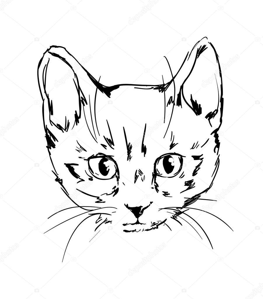 Handskizze Gezeichnete Süße Kätzchen Stockvektor Alsoush 128936212