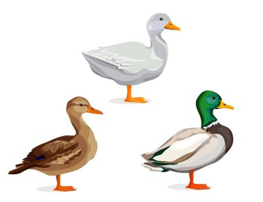 set of different ducks