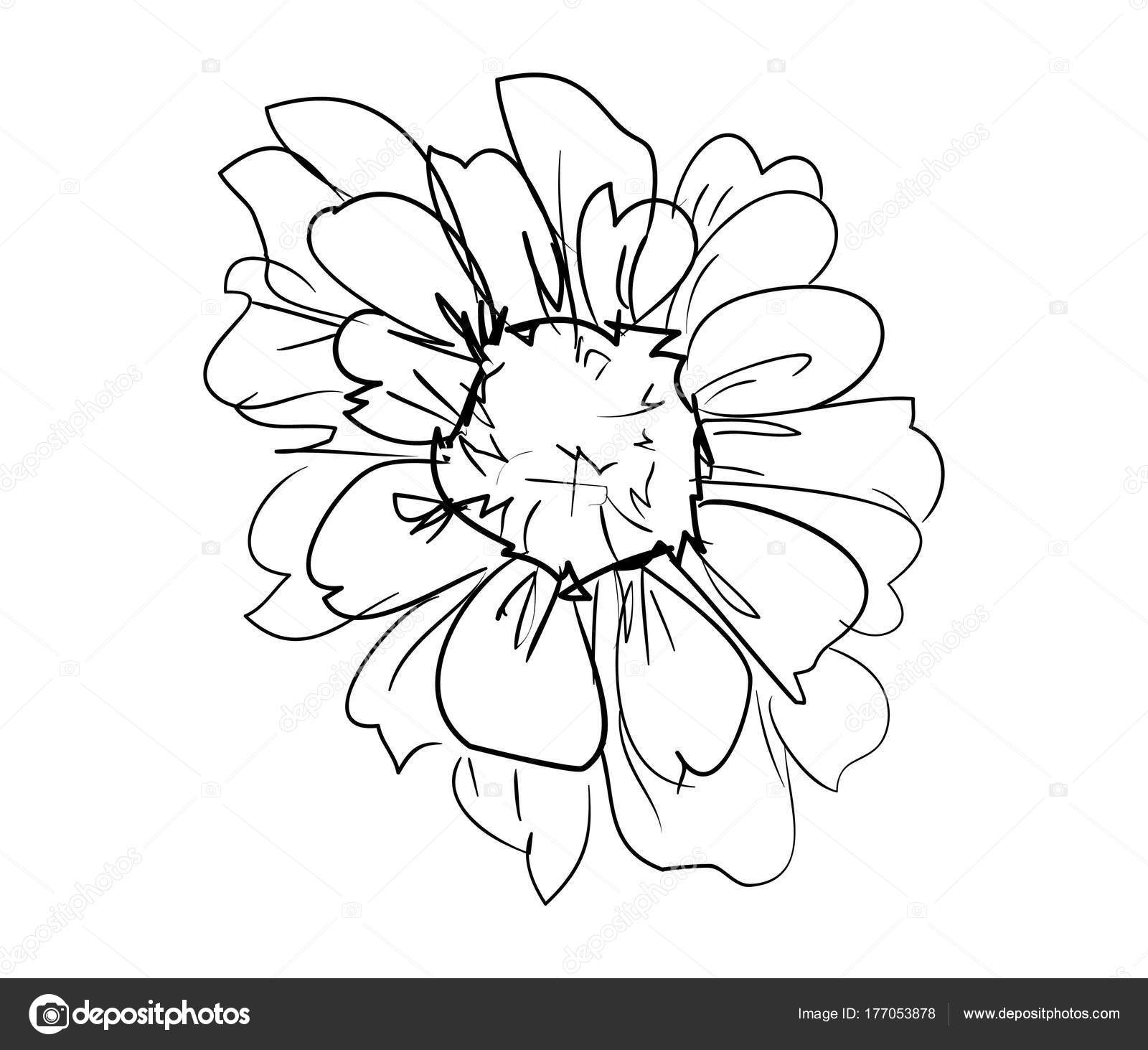 Hand drawn sketch beautiful flower vector illustration stock hand drawn sketch beautiful flower vector illustration stock vector izmirmasajfo
