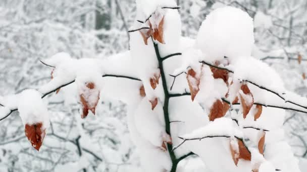 Zimní zasněžené lesní stromy