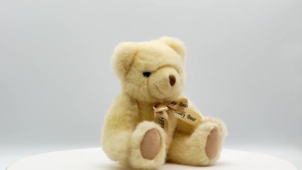 Medvídek na bílém pozadí 4k