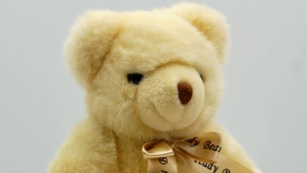 Teddy maci fehér háttér 4k