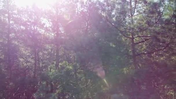Schöne Sonnen strahlen durch Baumwipfel, Sonne scheint durch Laub