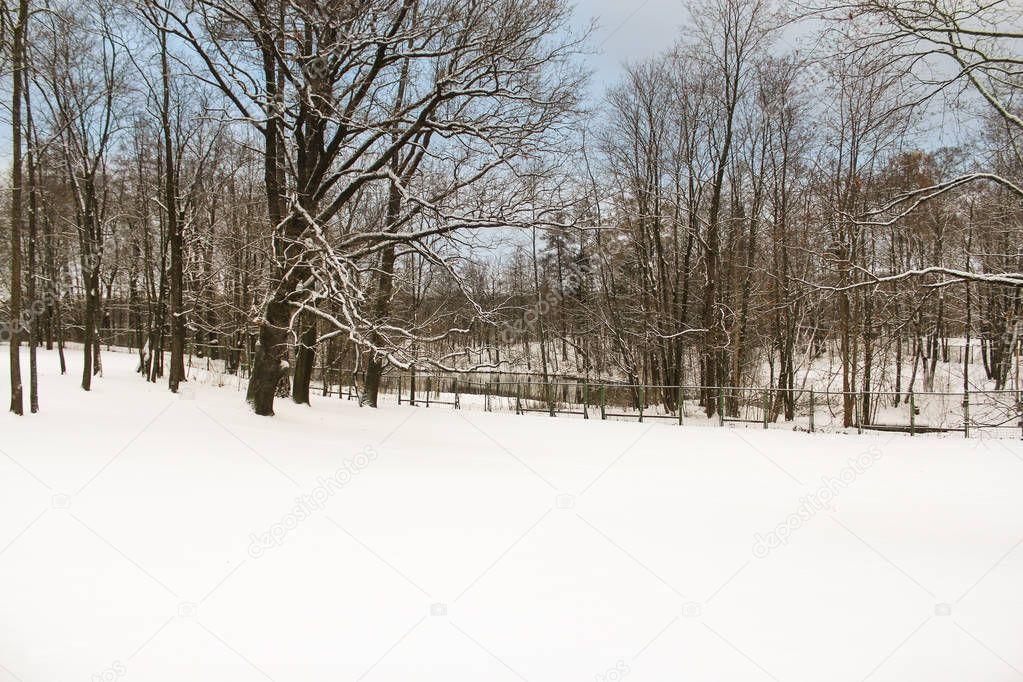 Unfrozen pond in winter park.