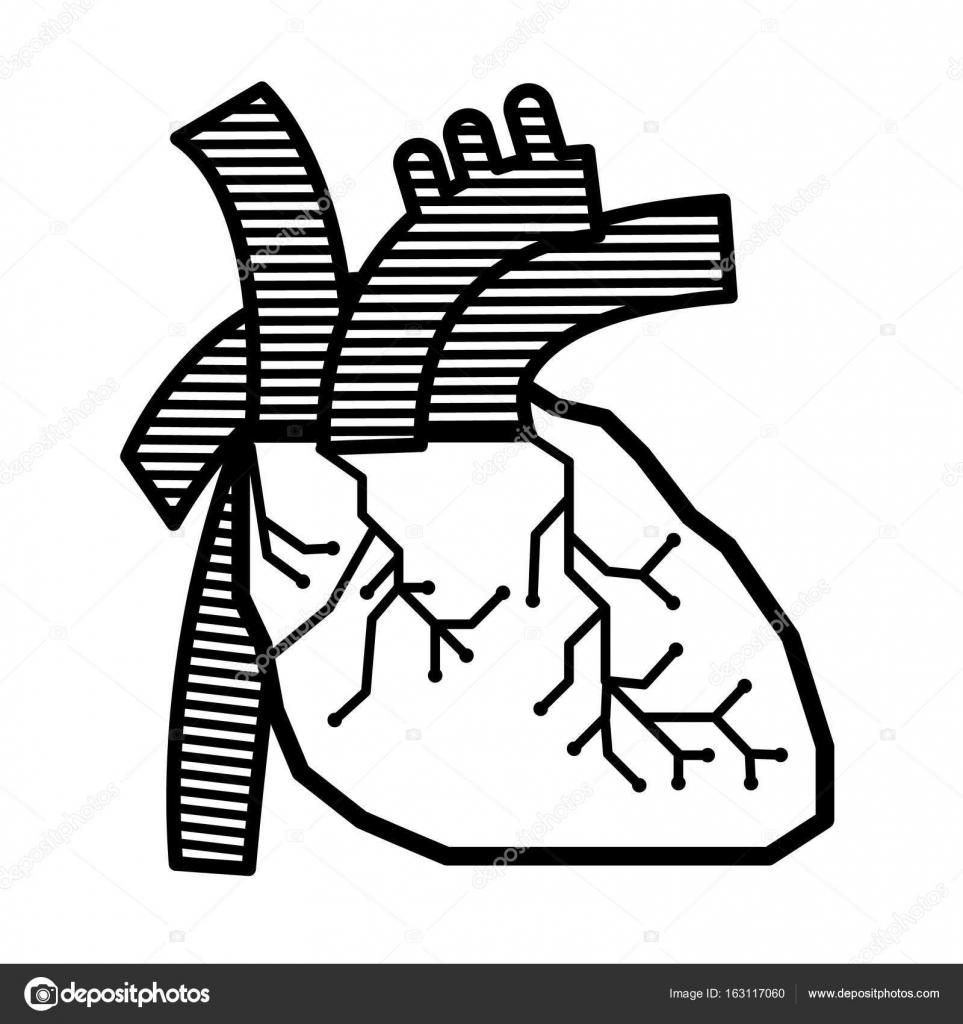 Diseño de vector corazón línea Anatomía para la ciencia — Archivo ...