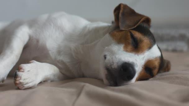 Hund schläft auf dem Bett