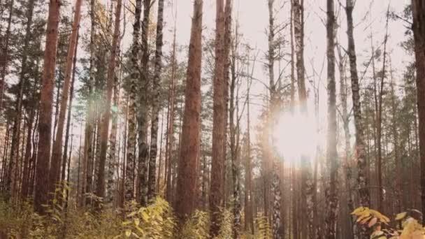 podzimní Les na slunci