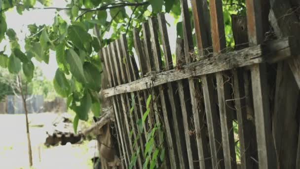 Old wooden fence covered with ivy