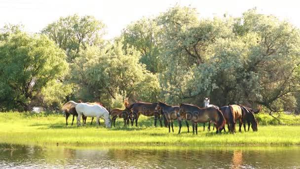 kleine Herde von Pferden und Fohlen auf der Weide