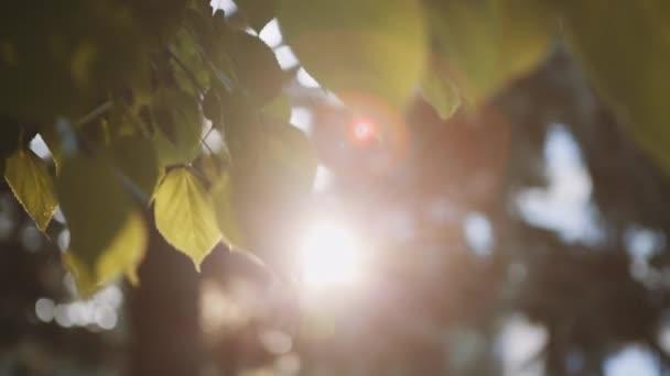 Akumulující paprsky slunce a prorážet listy stromu