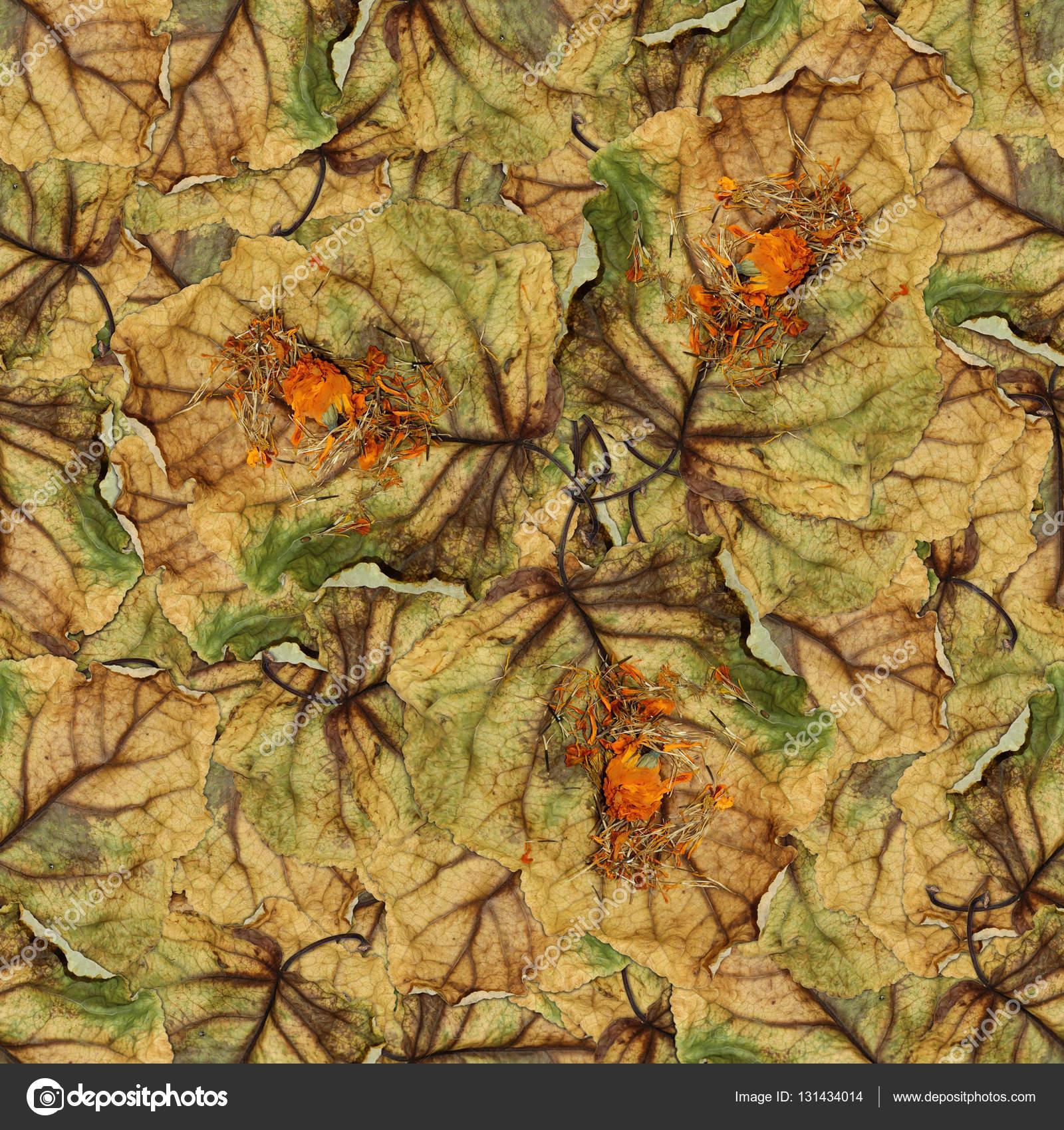 Seamless Background Pattern Texture Of Huge Leaves Of Poplar Stock Photo C Aarud 131434014