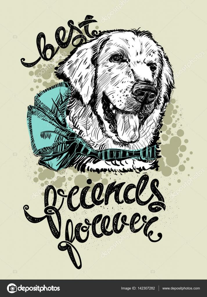 Dibujos Amigas Para Siempre Dibujo La Cabeza De Un Perro Labrador