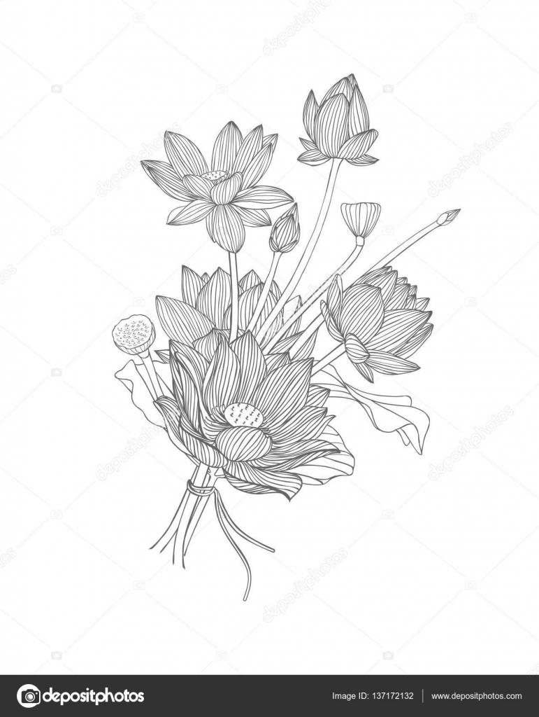 Lotus Flower Bouquet Black And White Stock Vector Ukususha