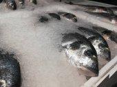 Fagyasztott dorado hal a boltok polcain