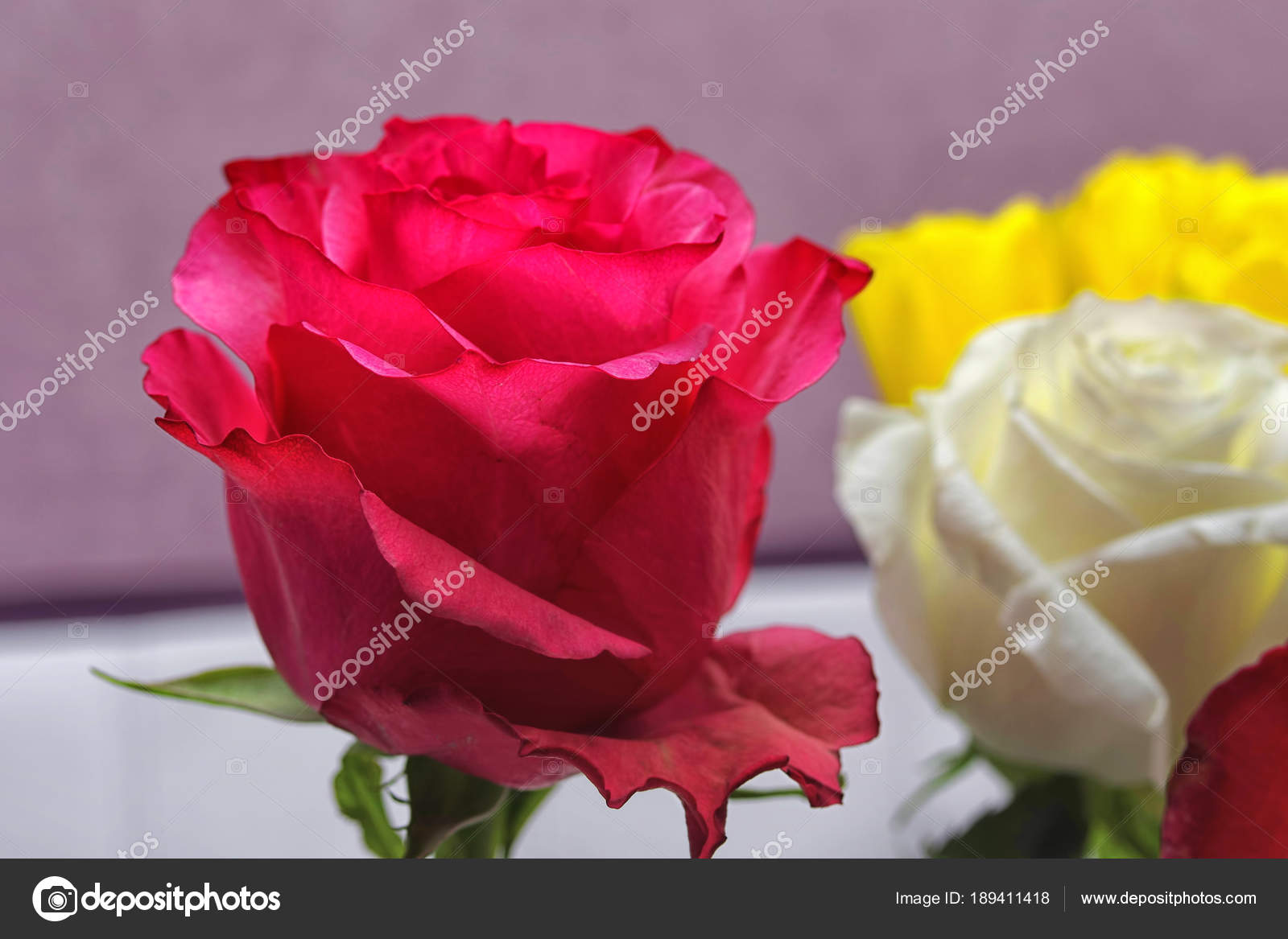 Opened red rose bud on the background of flowers of other colors ...