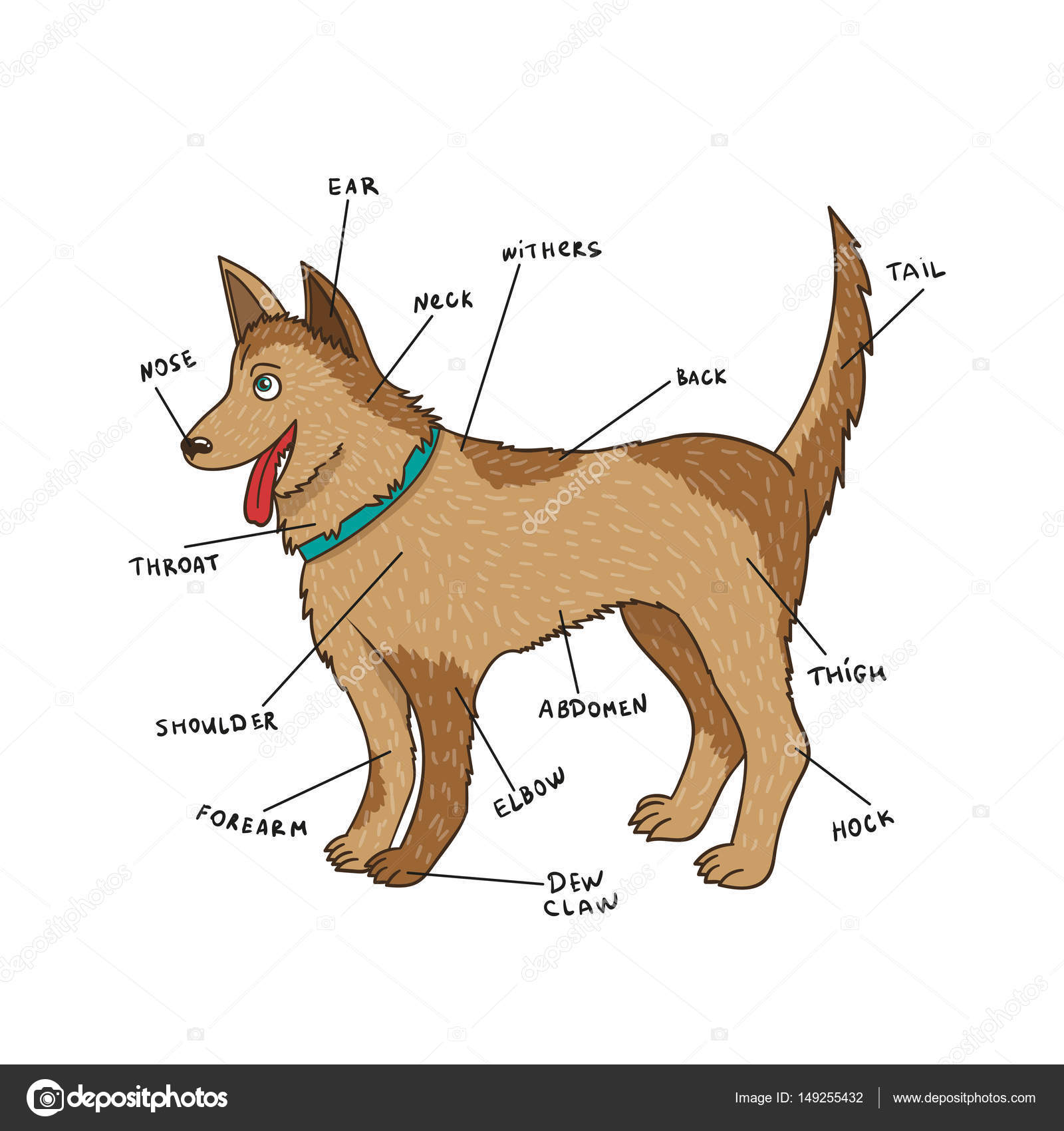 Dog external anatomy. Puppy parts on English — Stock Vector © Alisen ...