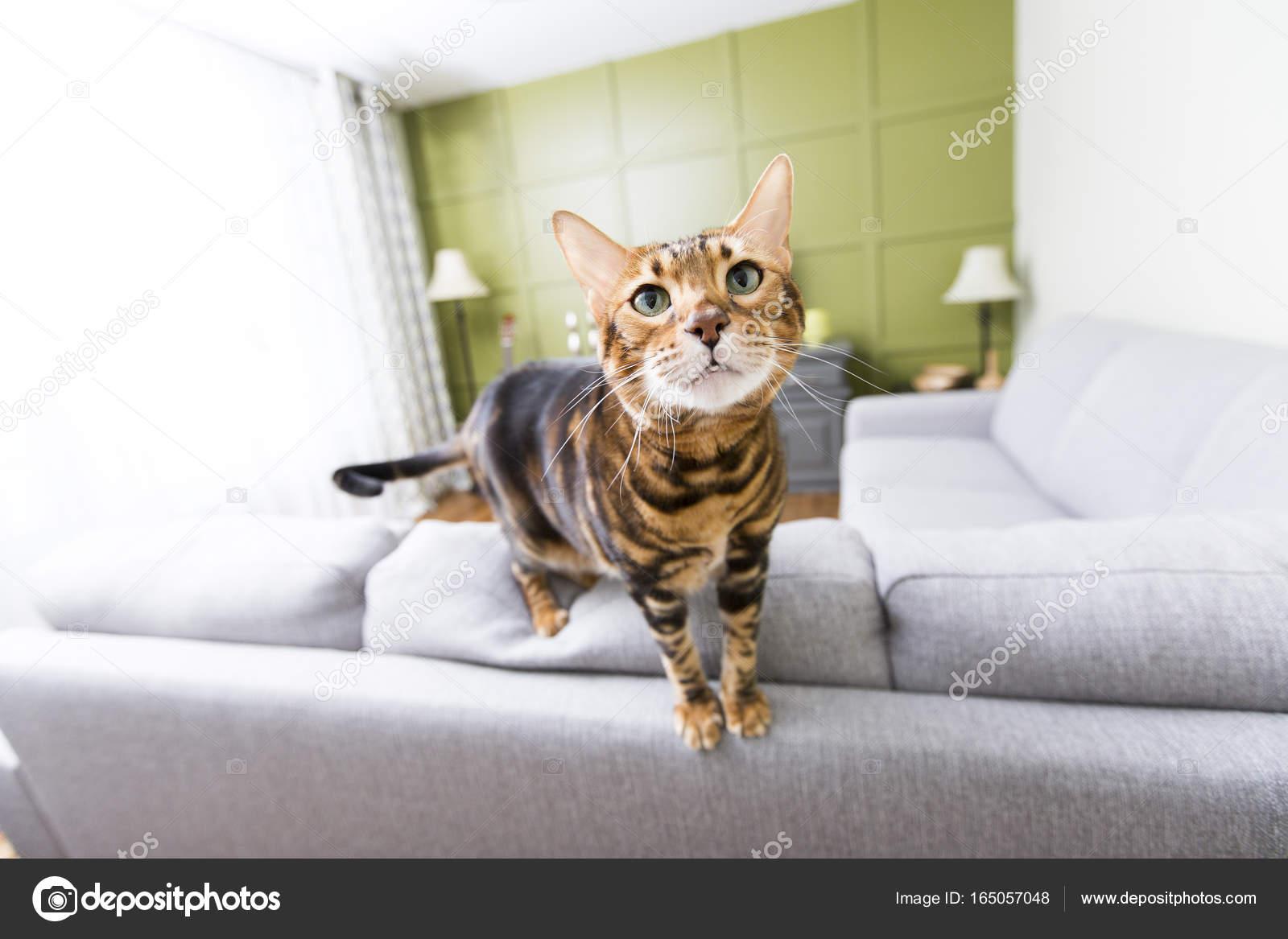Kat in de woonkamer op de bank u stockfoto lopolo