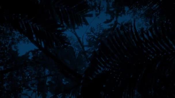 Gliding Under Jungle Plants At Night Stock Video C Rockfordmedia