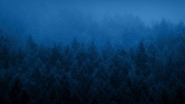Nebel legt sich im Morgengrauen über den Wald