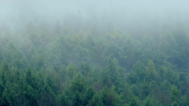 Misty Mountain Forest nel vento