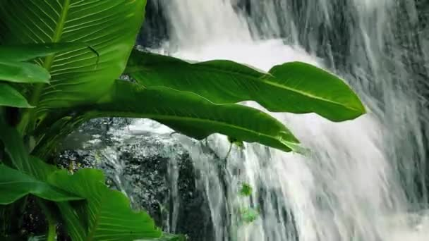 Velká rostlina Jungle vodopád